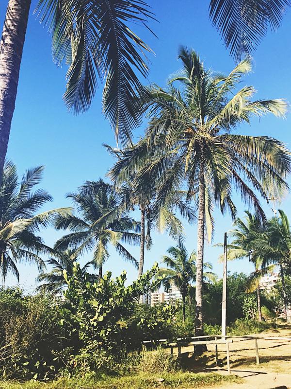 Chegada na praia de Peracanga: muitas palmeiras