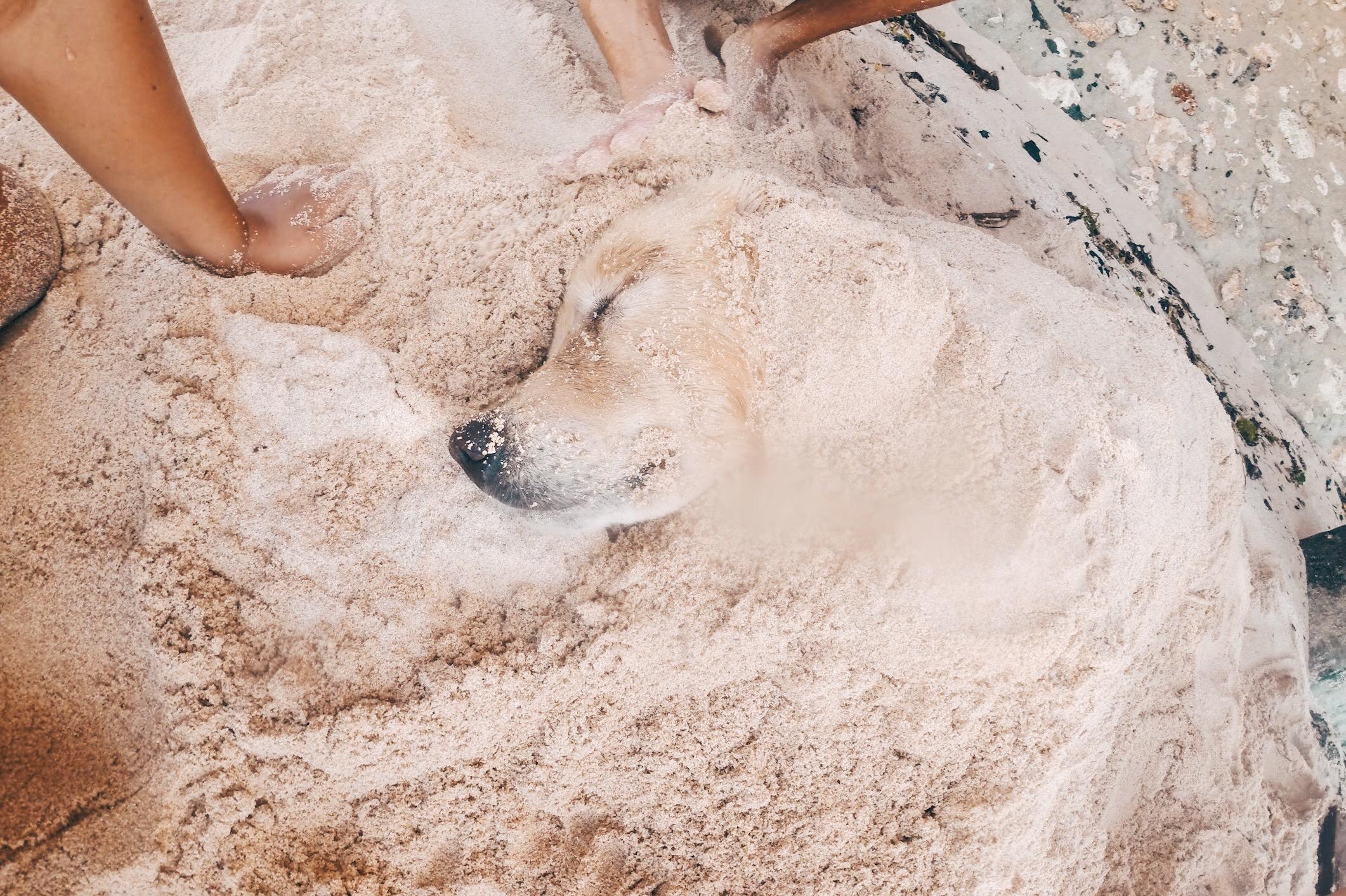 DOG-BINGIN-BEACH-BALI-01.jpg