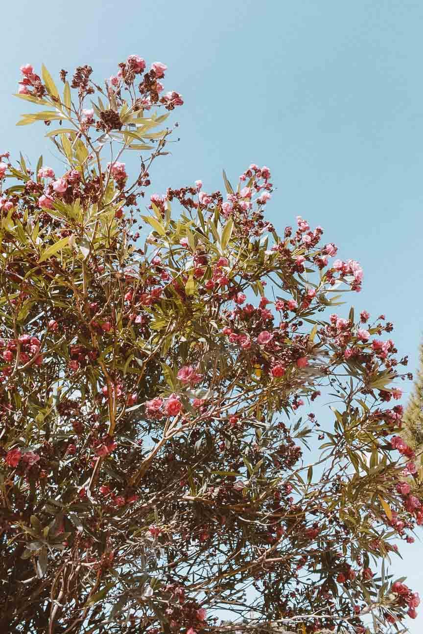 flores-entrada-acropole.JPG