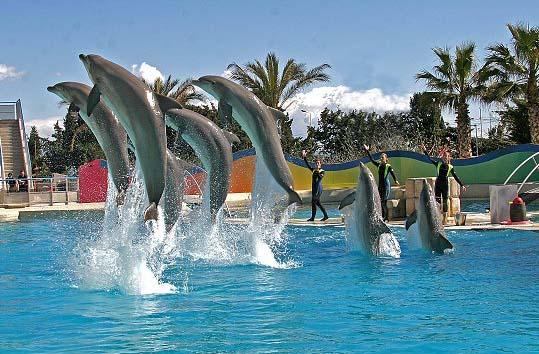 www.  marineland  canada.com    Marineland Passes $86 value