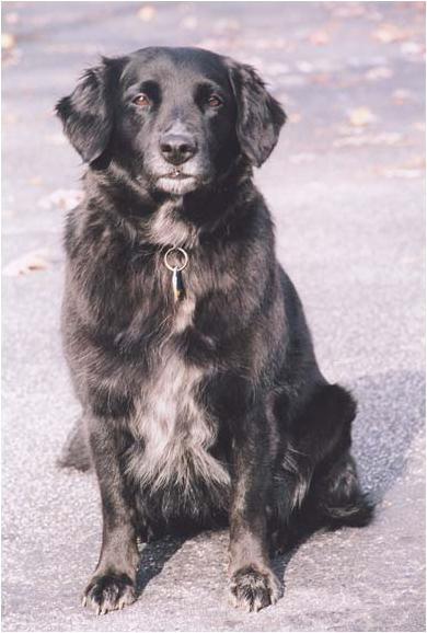 Becker Pet dog artist photo