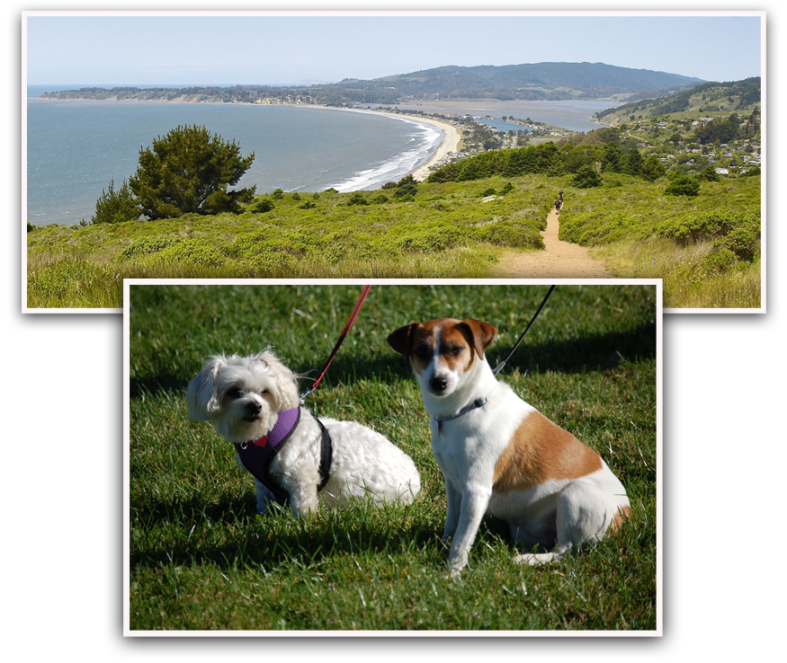 stinson beach dogs artist photos