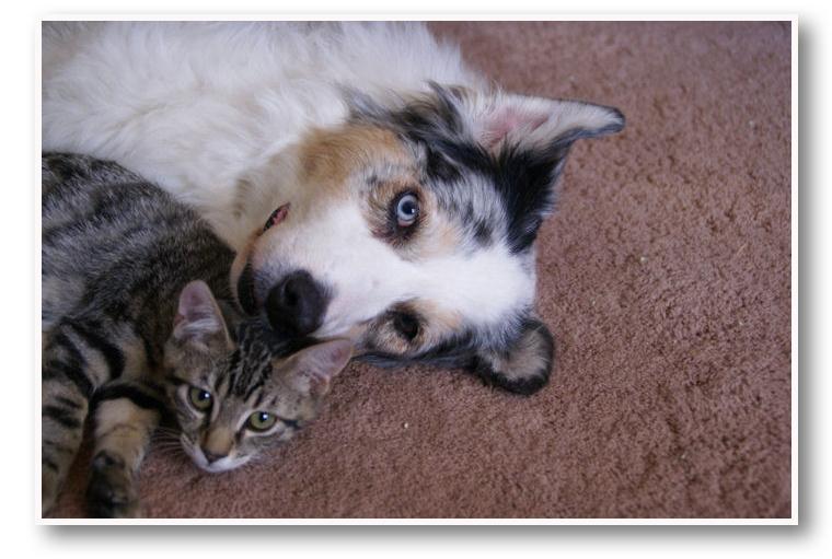 Cat Dog Artist Photo