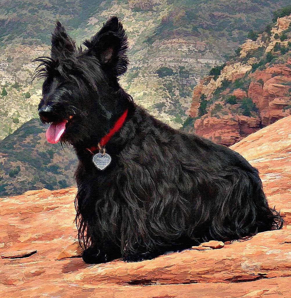 scottish-terrier-sedona-painting-PET-CU.jpg