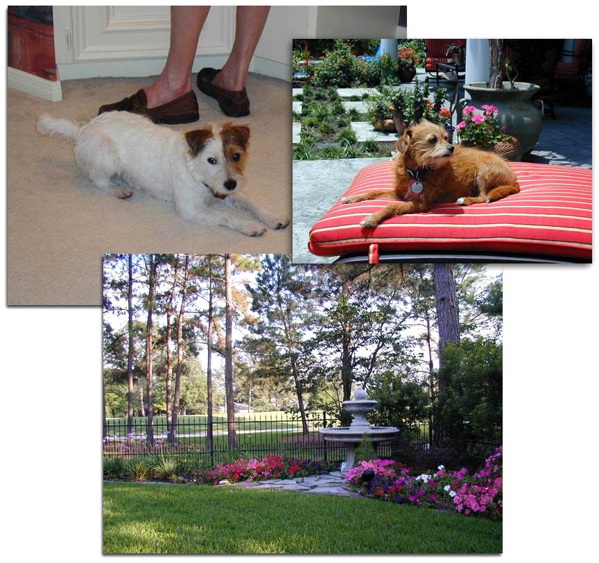 dog artist photos