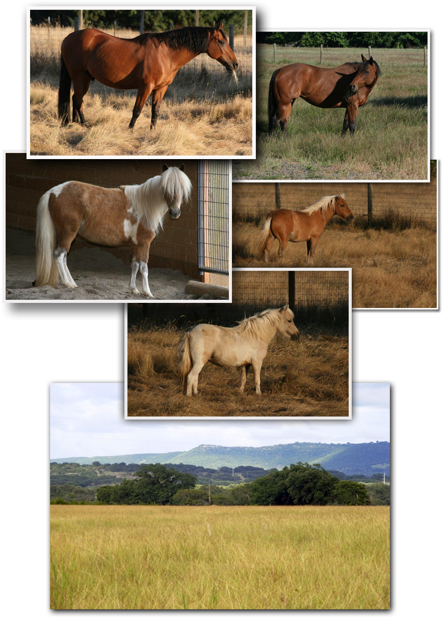 equine horse artist photos