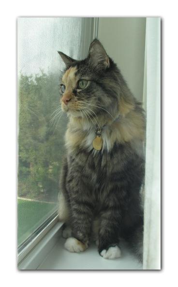 Cat in window photo