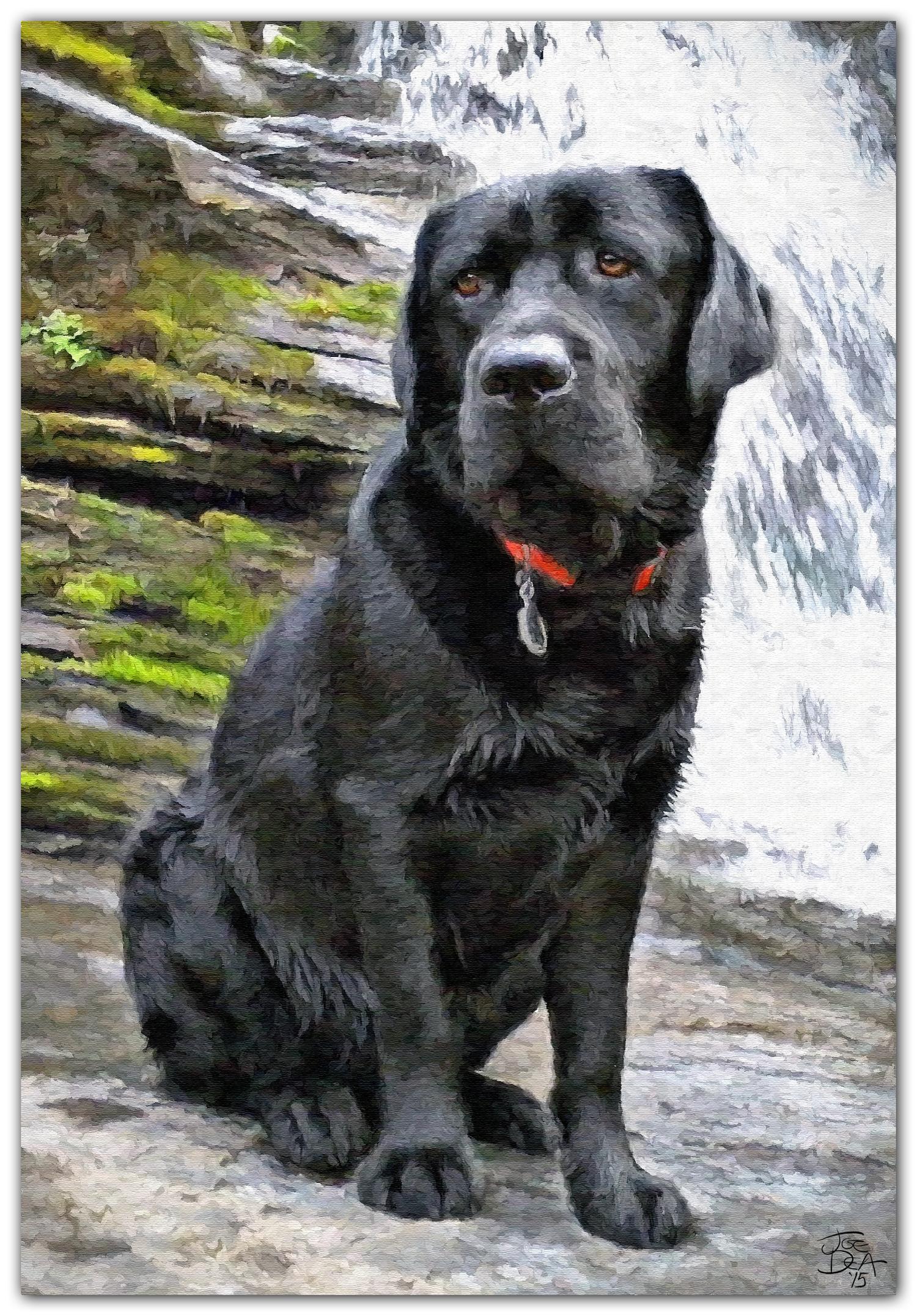 labrador retriever dog painting from photo
