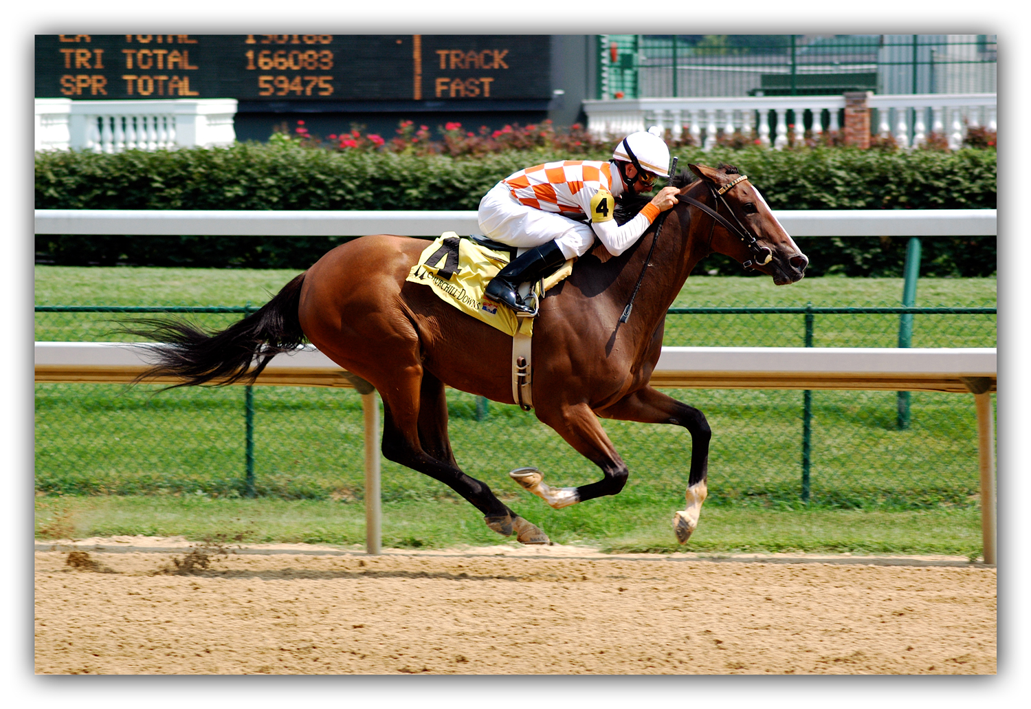 thoroughbred-racehorse-photo-into-painting