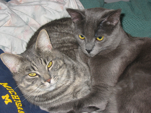 grey-cats-photo-painting