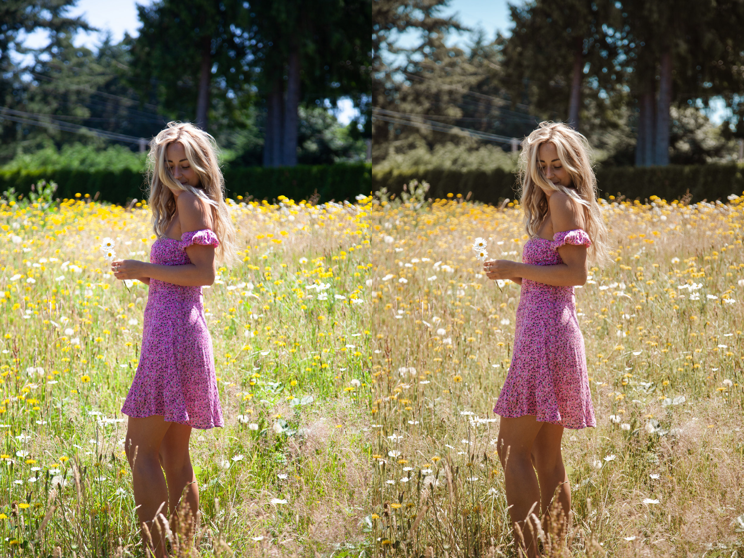 CJPresets-Nature-FlowerField.jpg