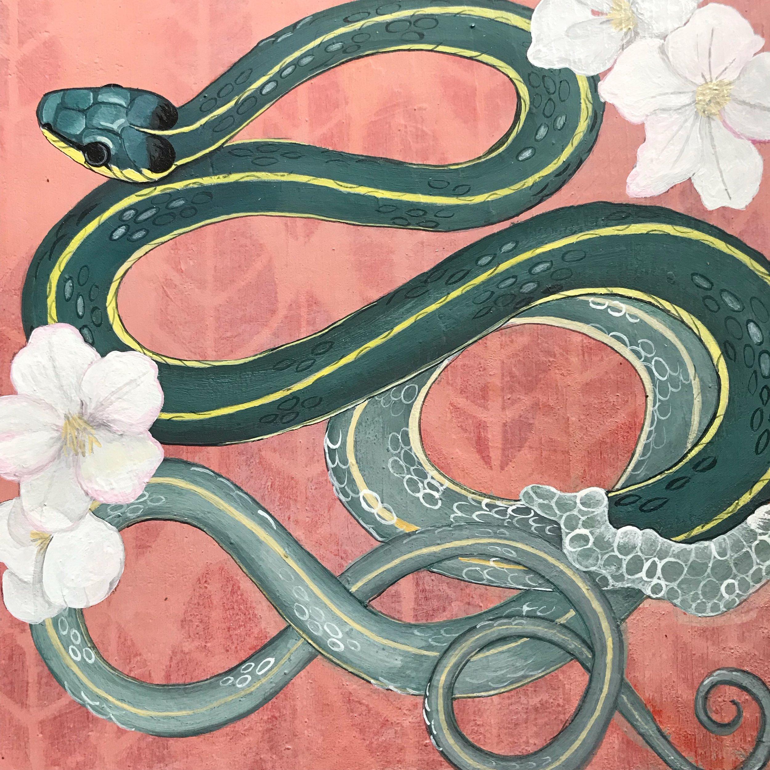 Garden Snake Shedding