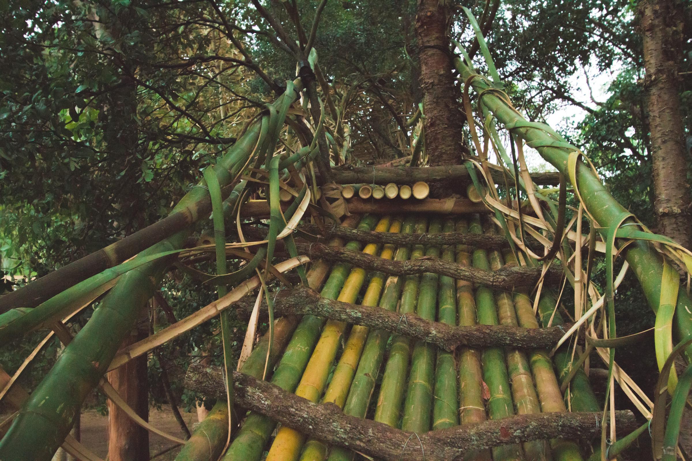 Tree house photography by Mercurio Alvarado  (3 of 132).jpg