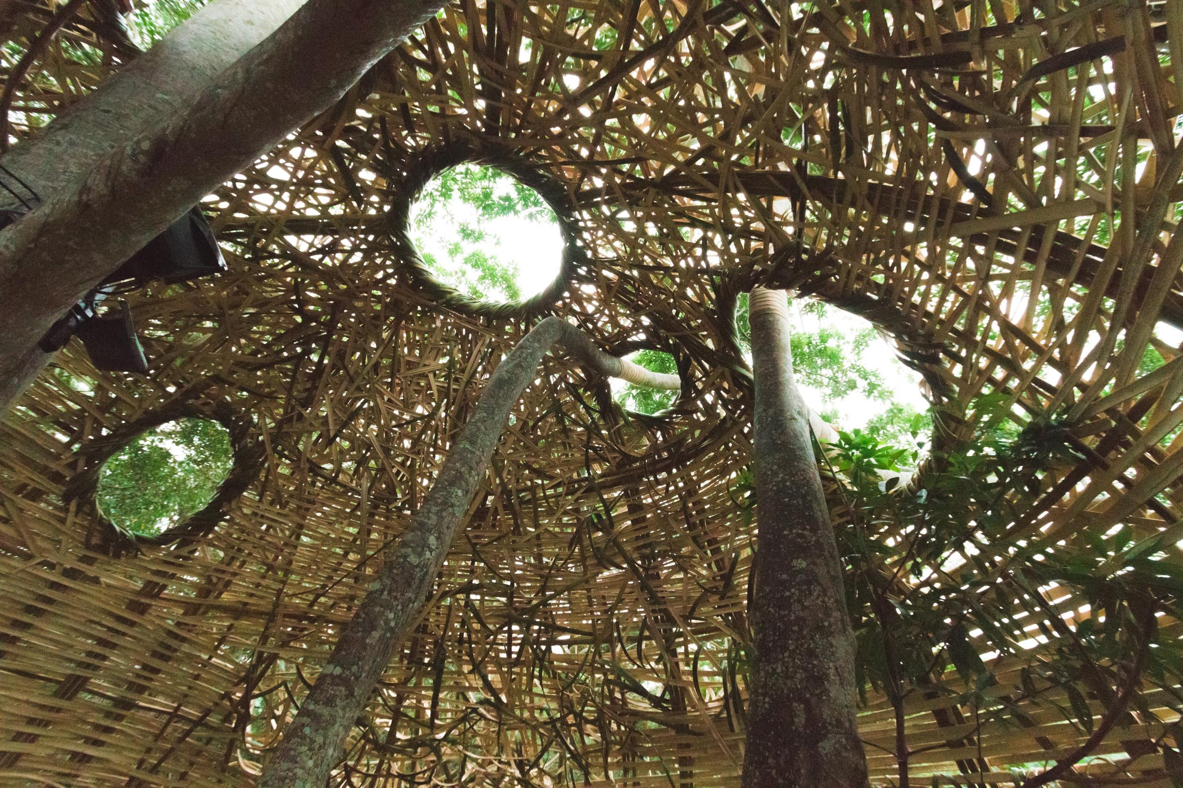Tree house photography by Mercurio Alvarado  (13 of 132).jpg