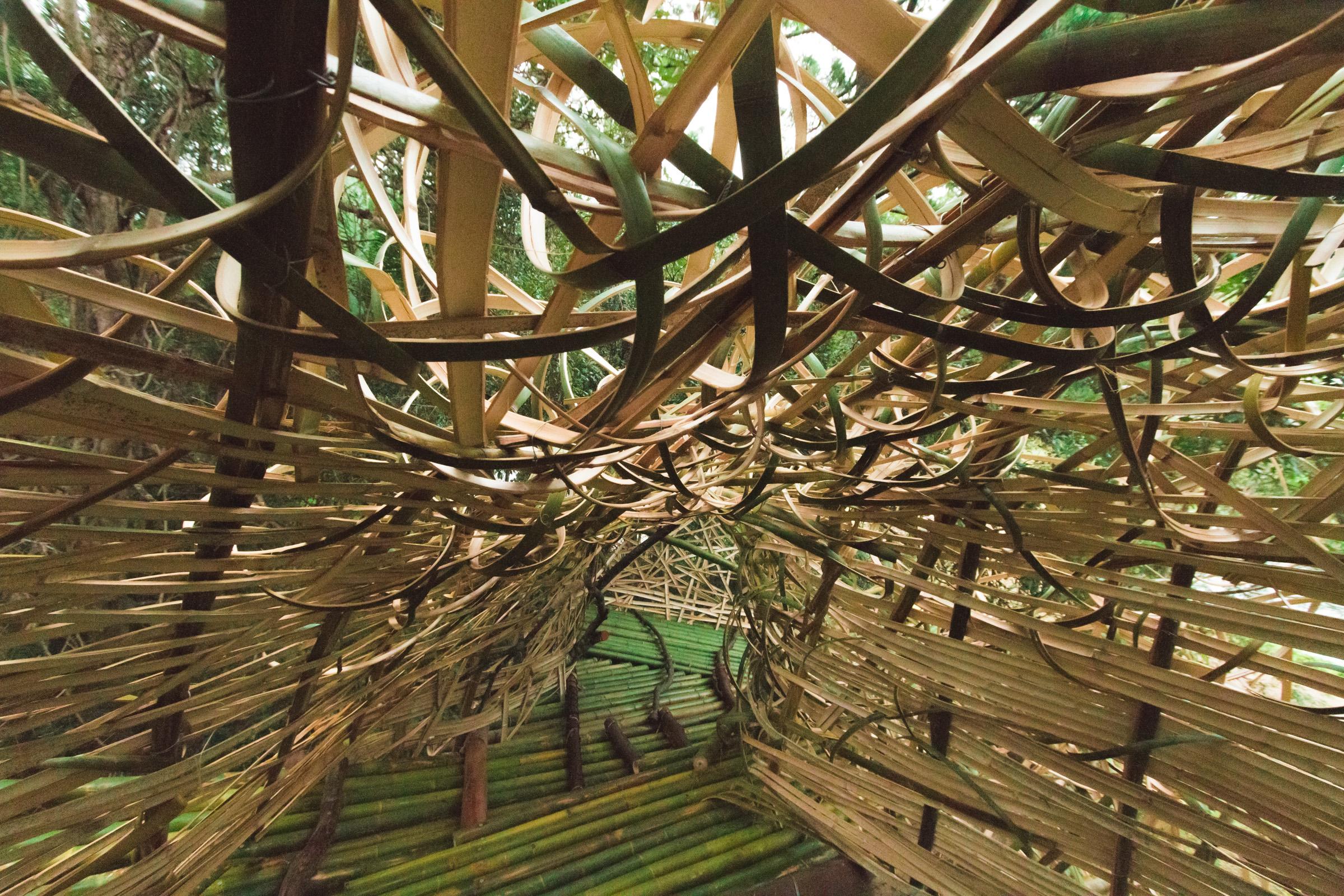 Tree house photography by Mercurio Alvarado  (15 of 132).jpg