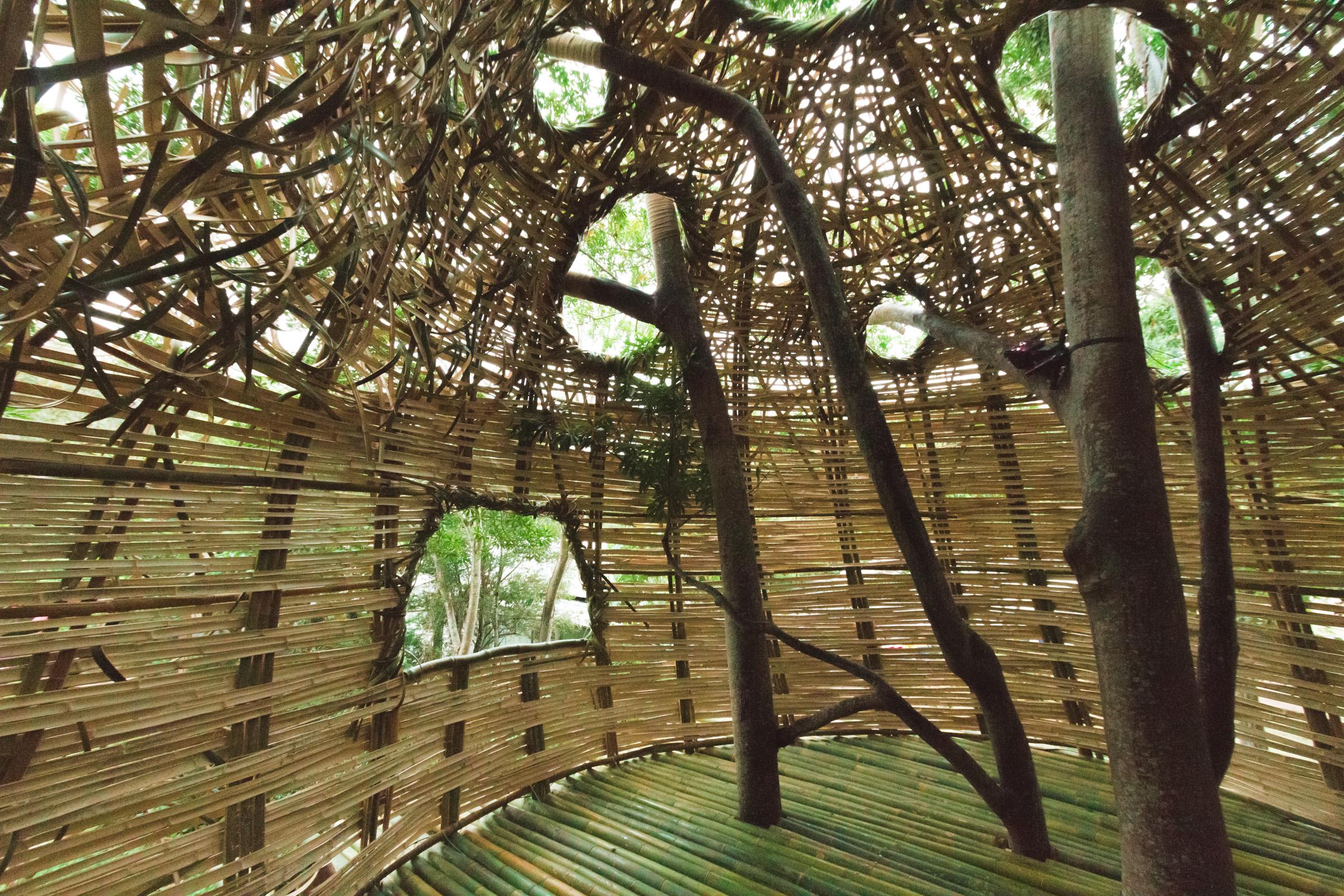 Tree house photography by Mercurio Alvarado  (14 of 132).jpg