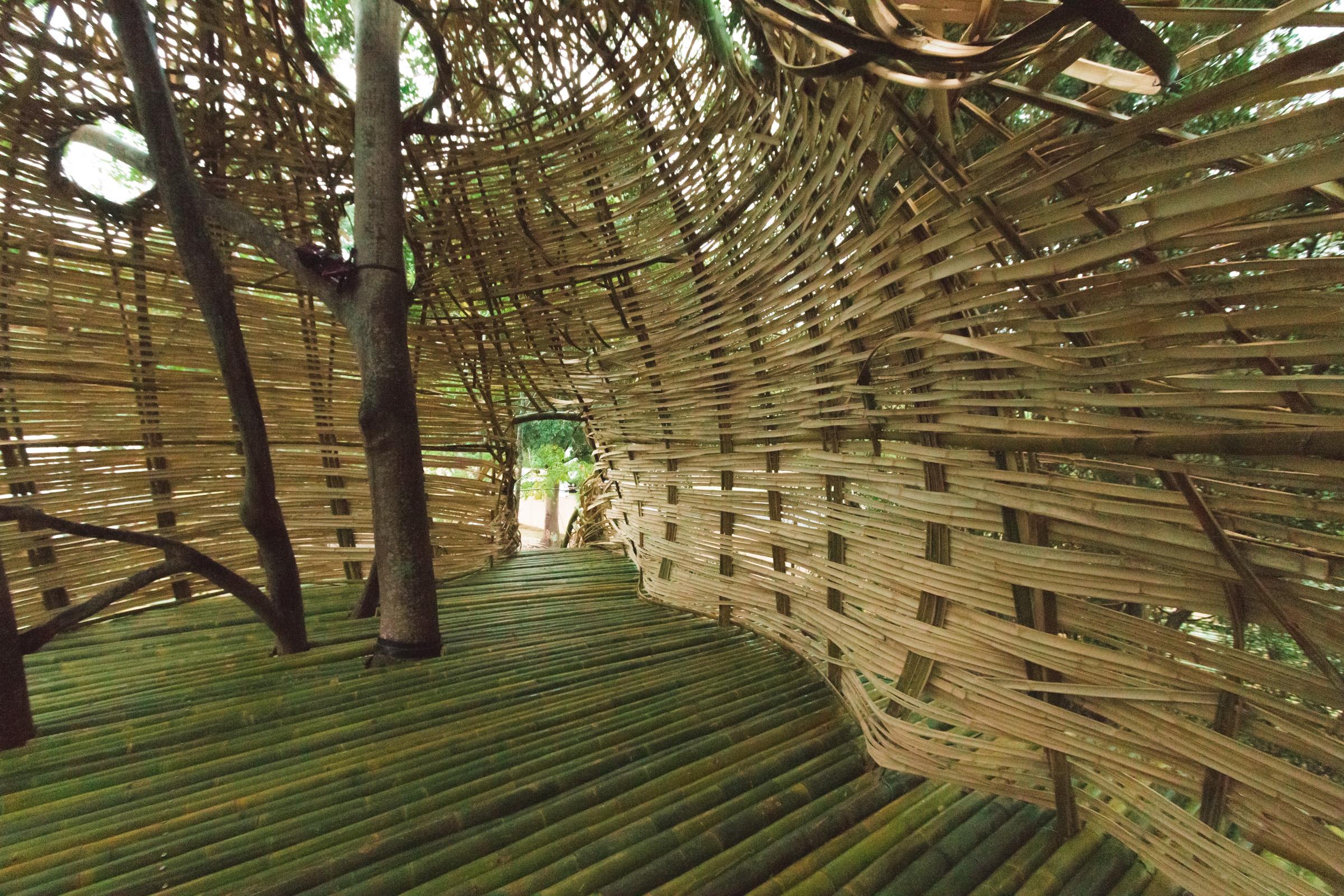Tree house photography by Mercurio Alvarado  (19 of 132).jpg