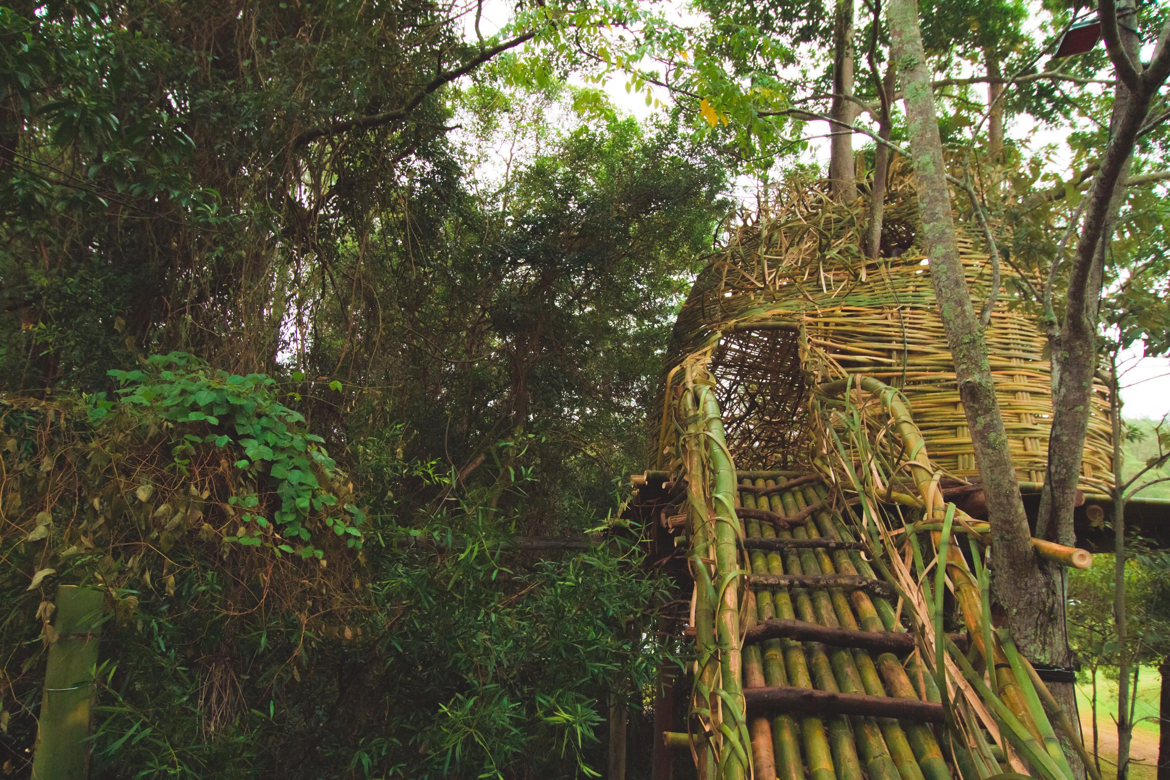 Tree house photography by Mercurio Alvarado  (25 of 132).jpg