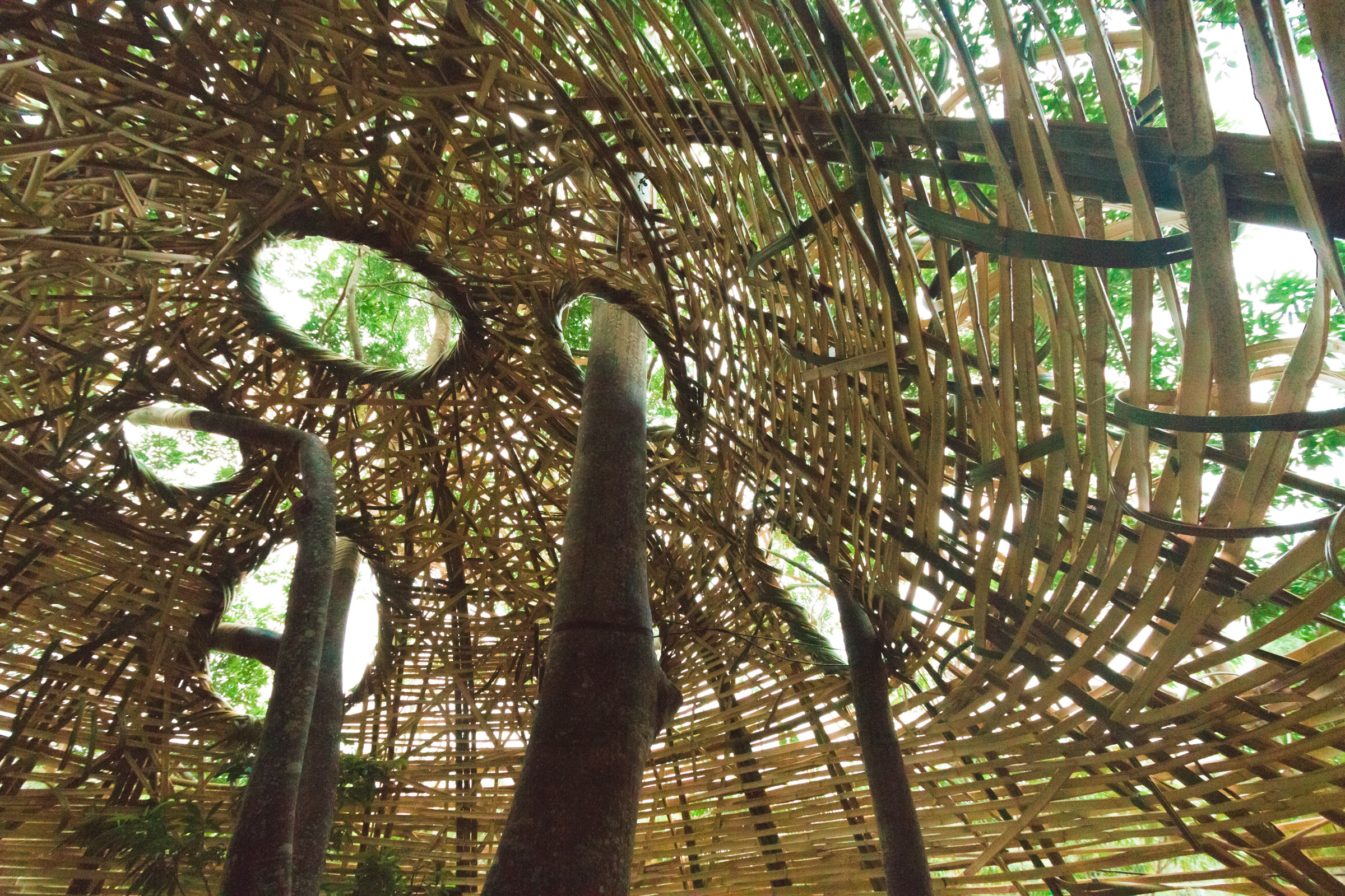 Tree house photography by Mercurio Alvarado  (24 of 132).jpg
