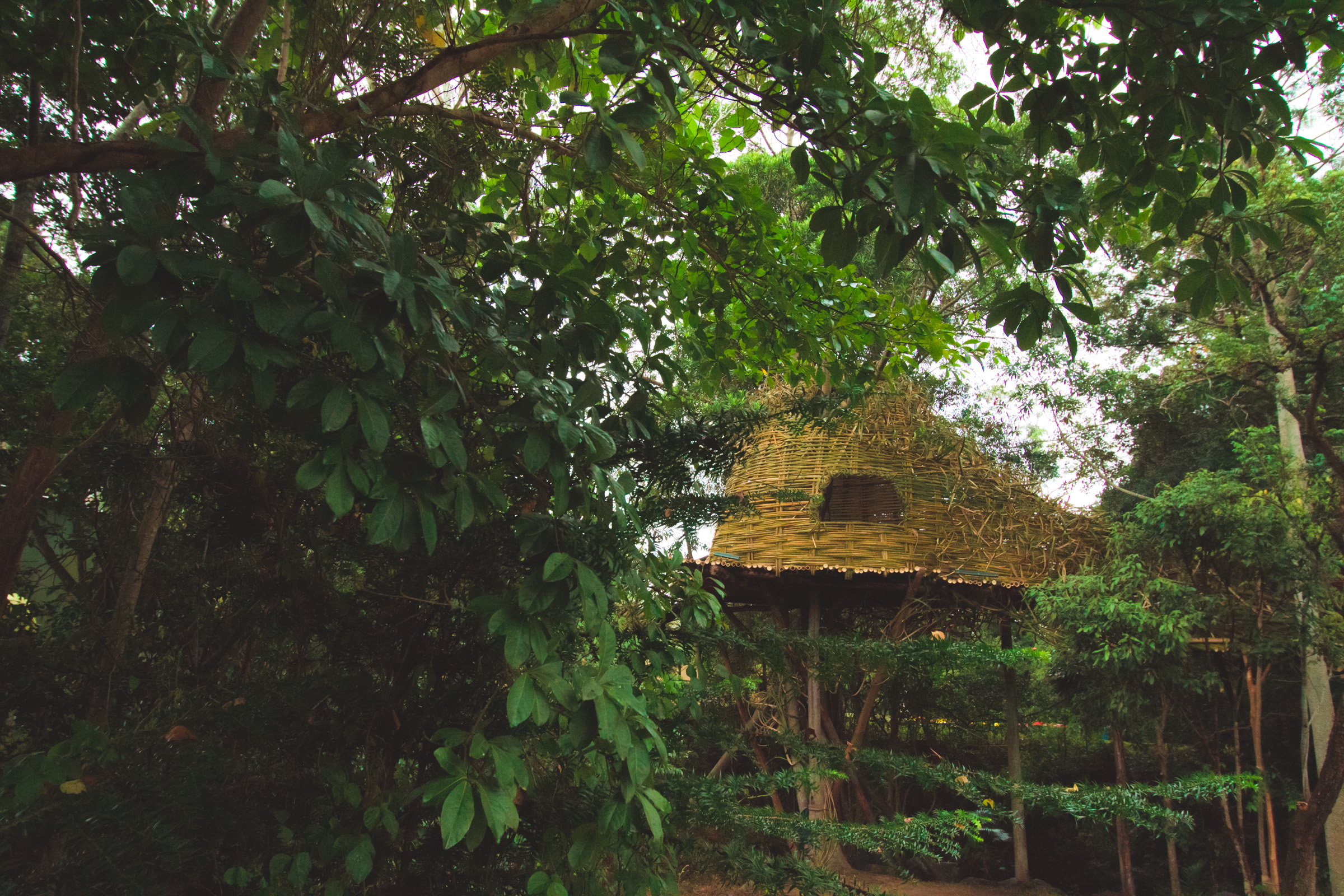 Tree house photography by Mercurio Alvarado  (30 of 132).jpg