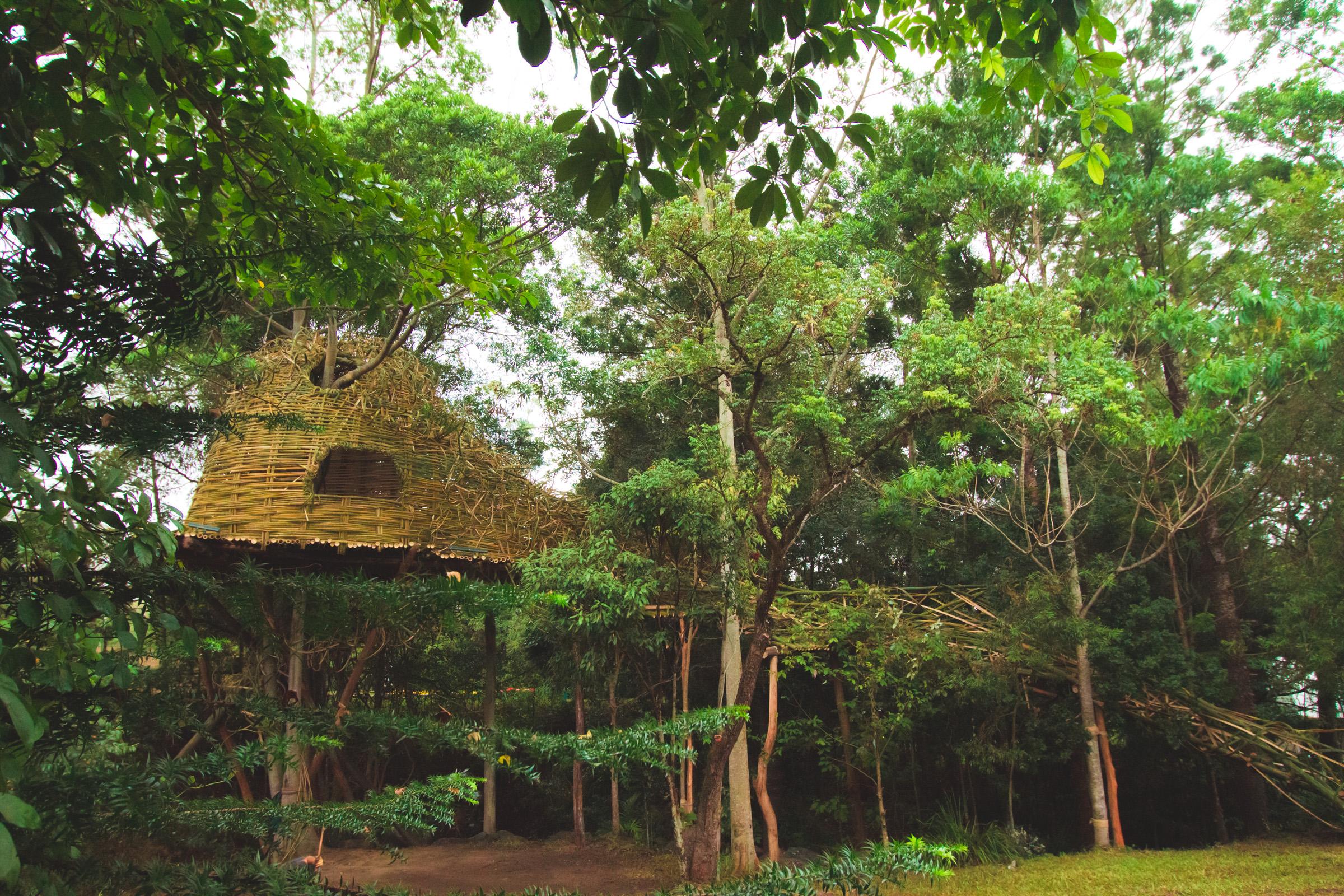 Tree house photography by Mercurio Alvarado  (31 of 132).jpg