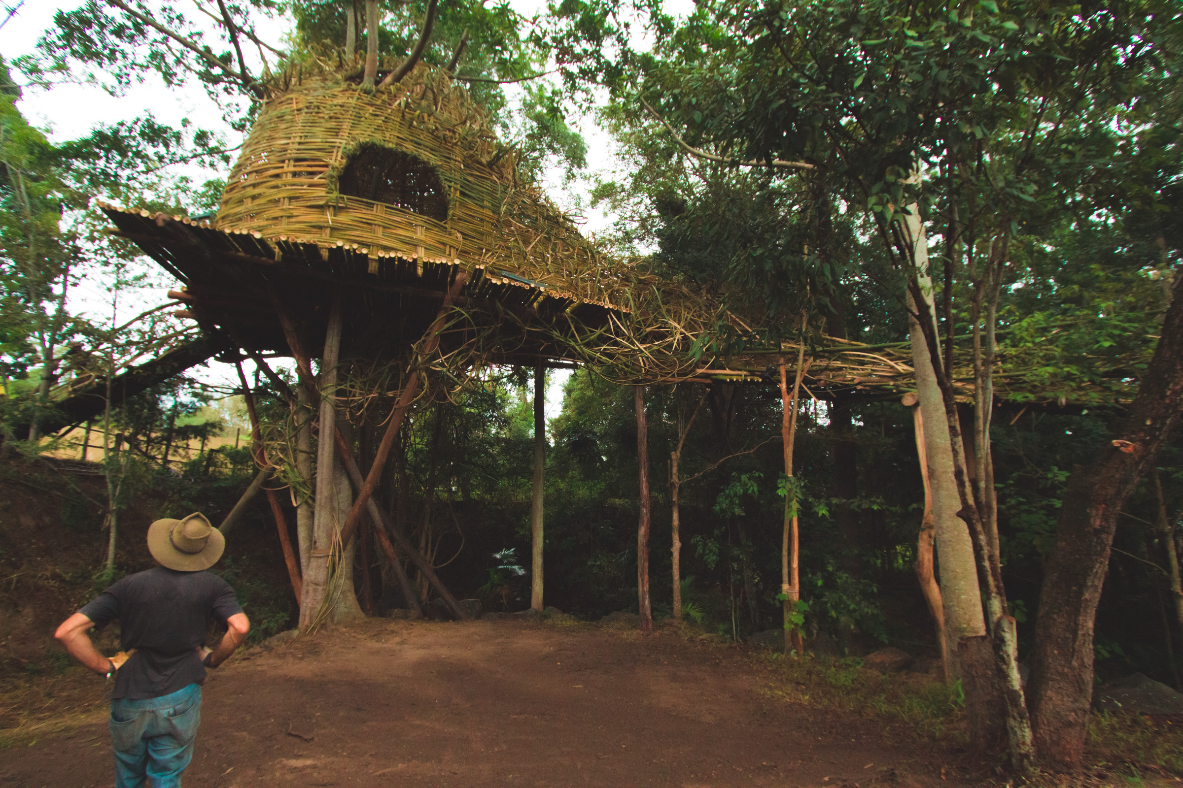 Tree house photography by Mercurio Alvarado  (35 of 132).jpg