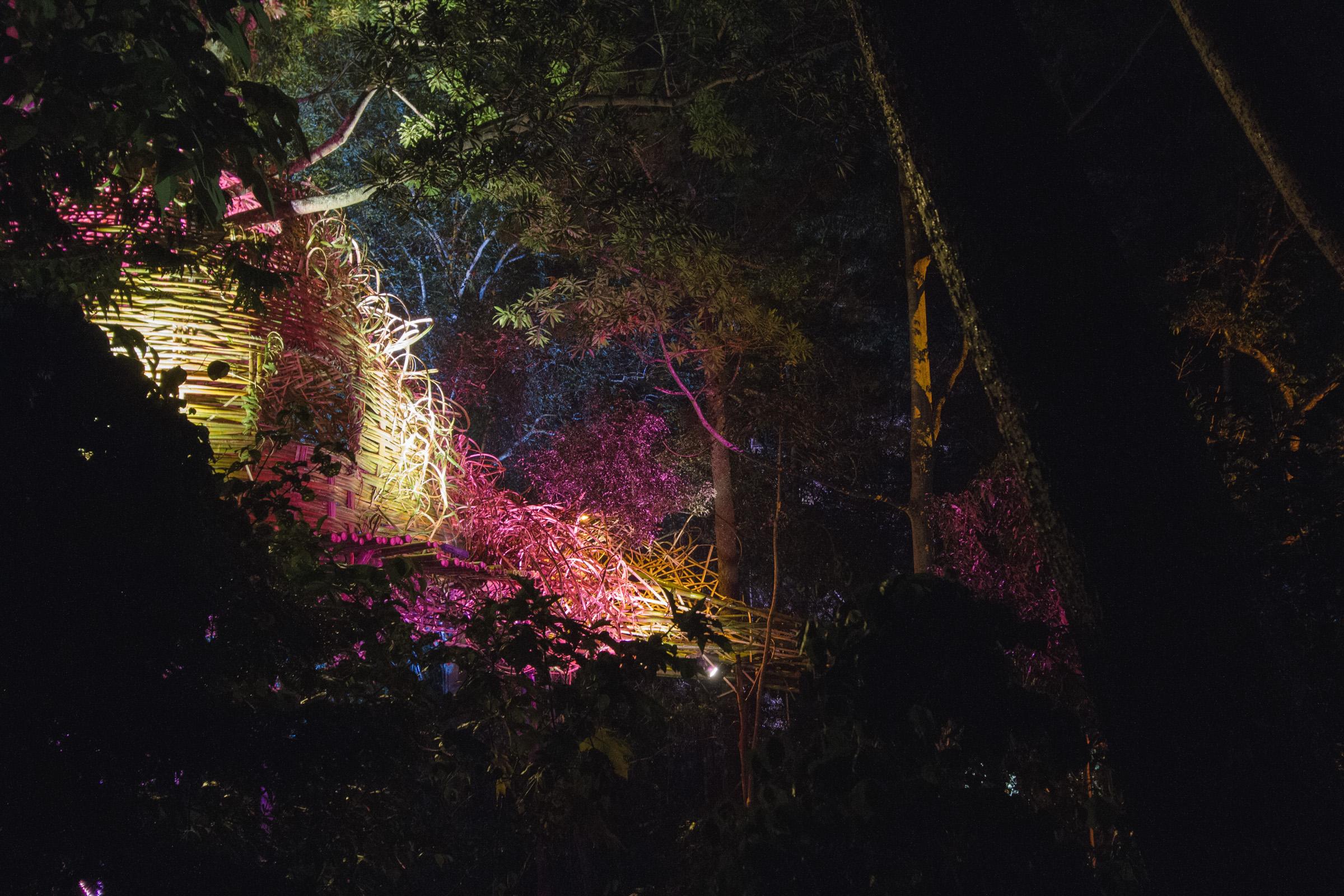 Tree house photography by Mercurio Alvarado  (47 of 132).jpg