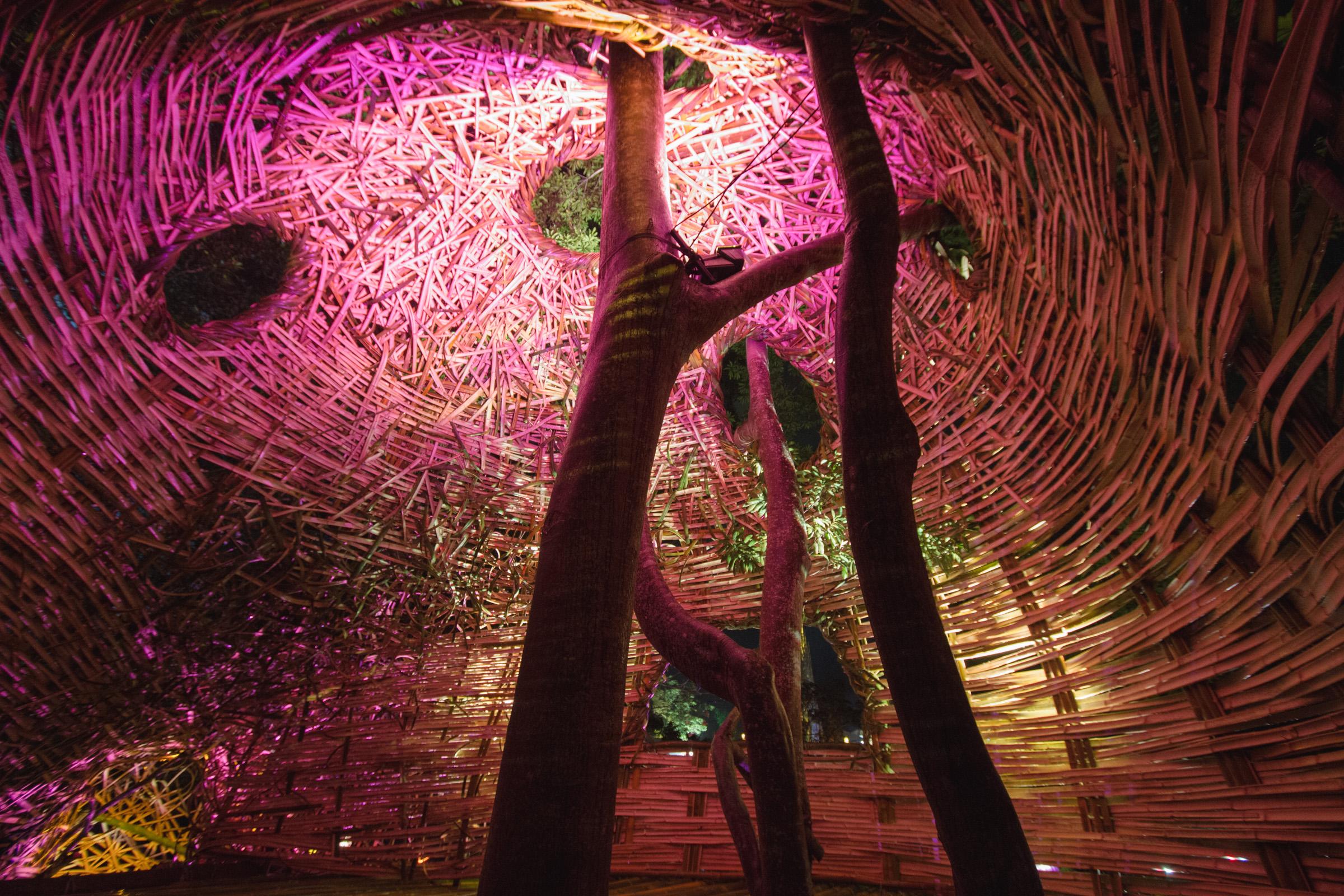 Tree house photography by Mercurio Alvarado  (58 of 132).jpg