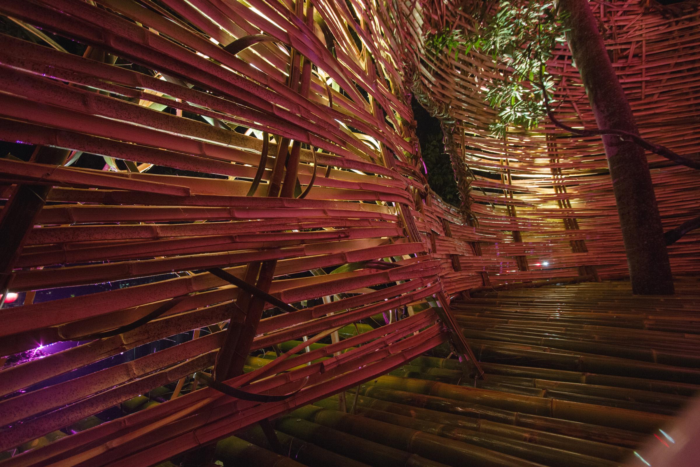 Tree house photography by Mercurio Alvarado  (66 of 132).jpg