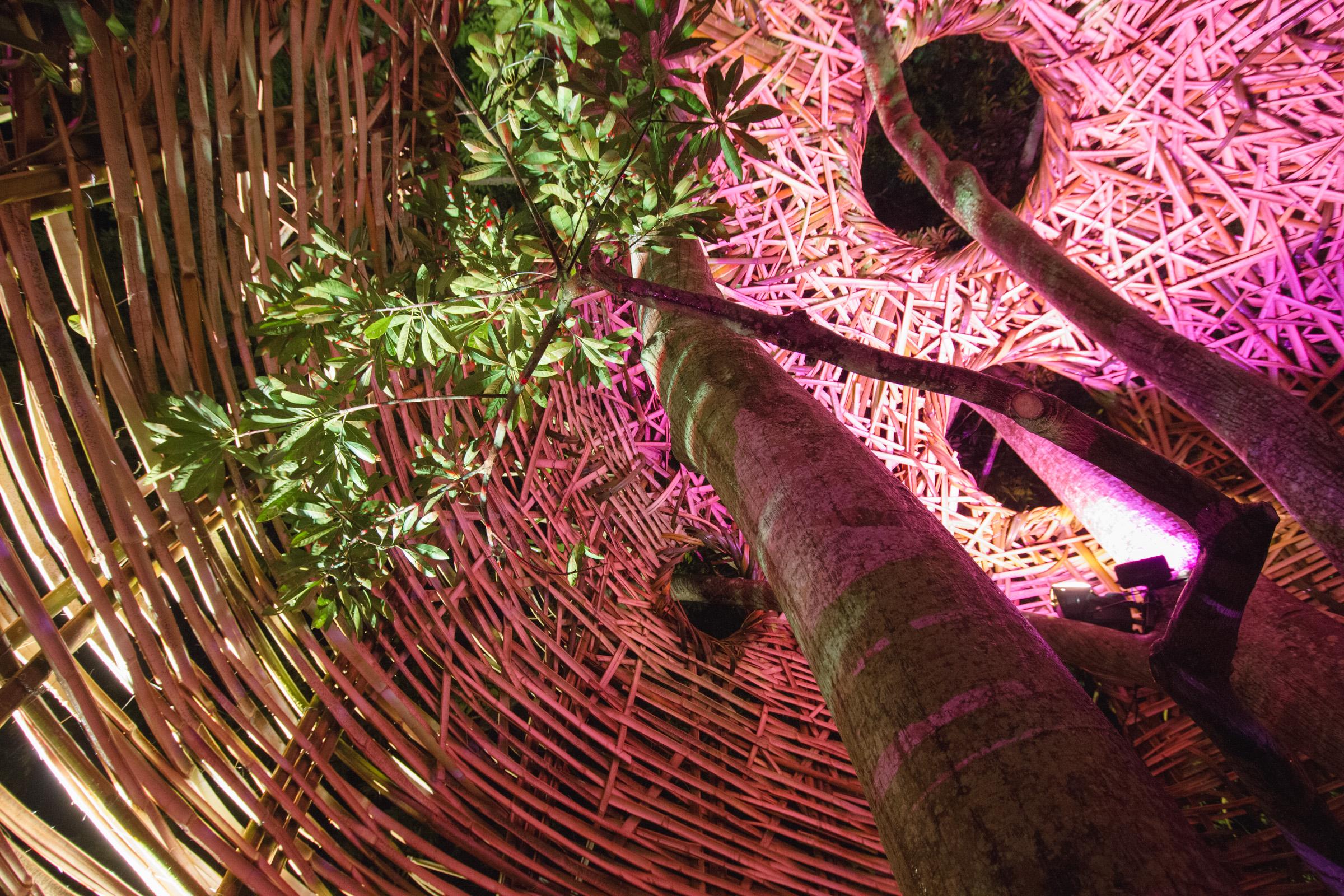 Tree house photography by Mercurio Alvarado  (70 of 132).jpg