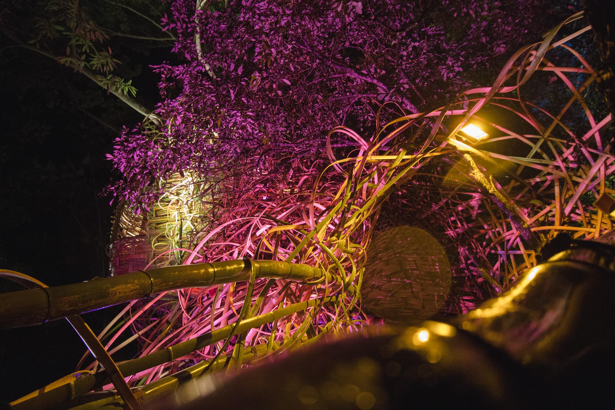 Tree house photography by Mercurio Alvarado  (86 of 132).jpg