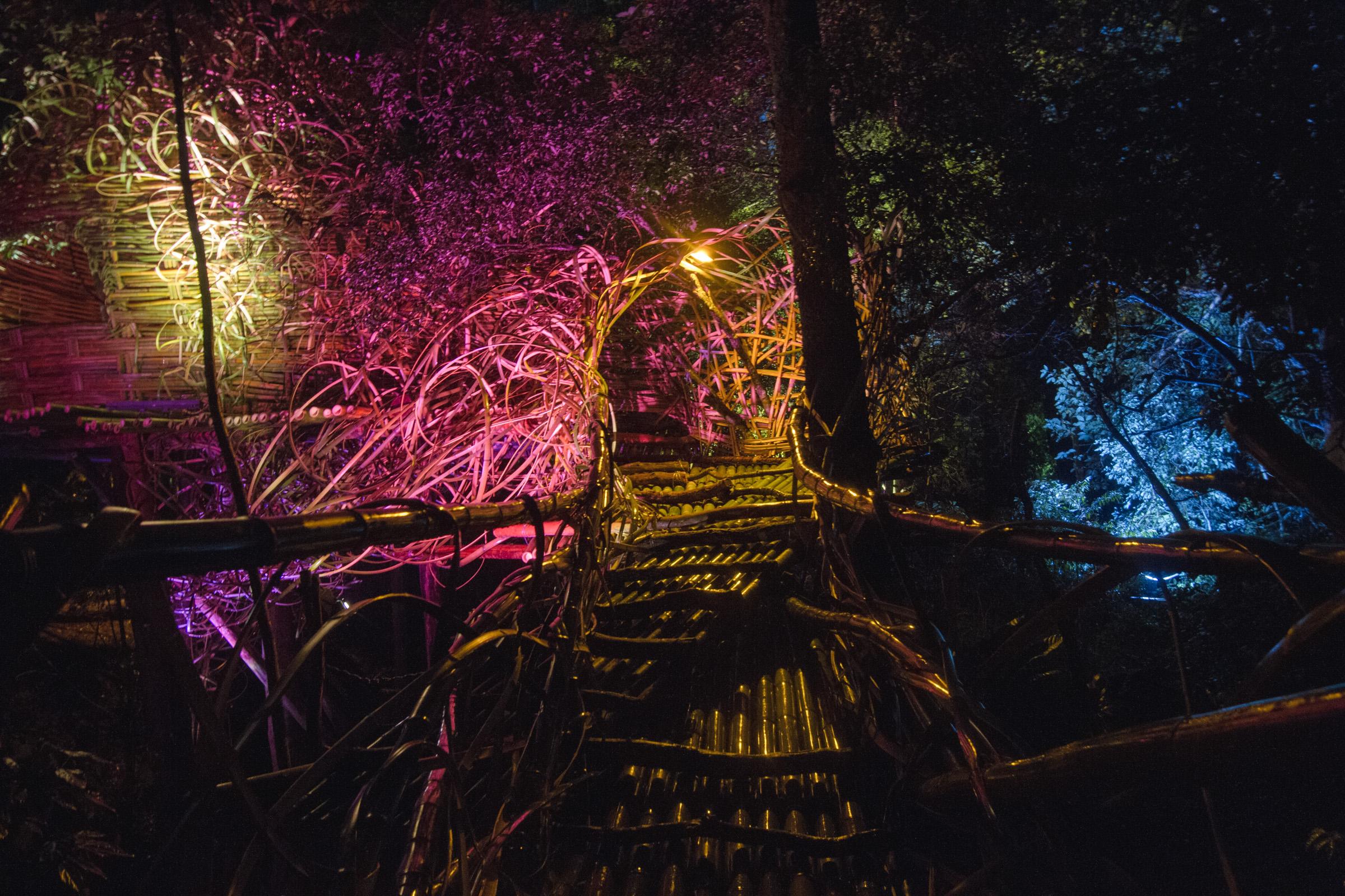Tree house photography by Mercurio Alvarado  (88 of 132).jpg