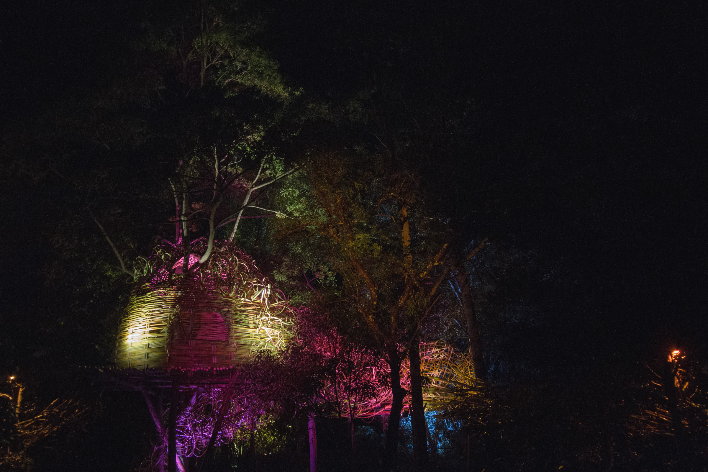 Tree house photography by Mercurio Alvarado  (96 of 132).jpg