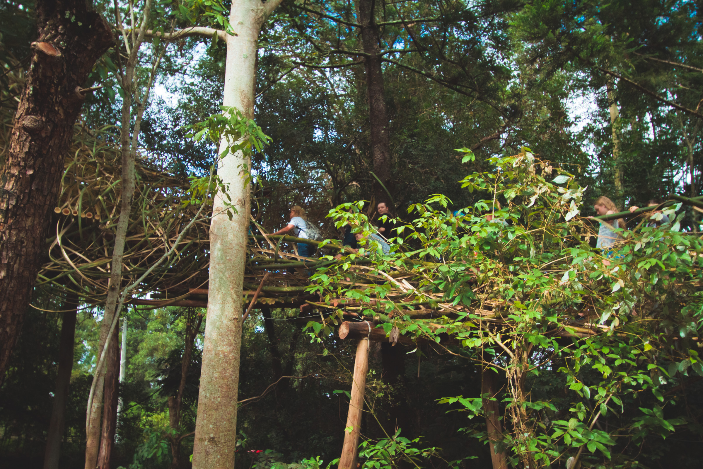 Tree house photography by Mercurio Alvarado  (100 of 132).jpg