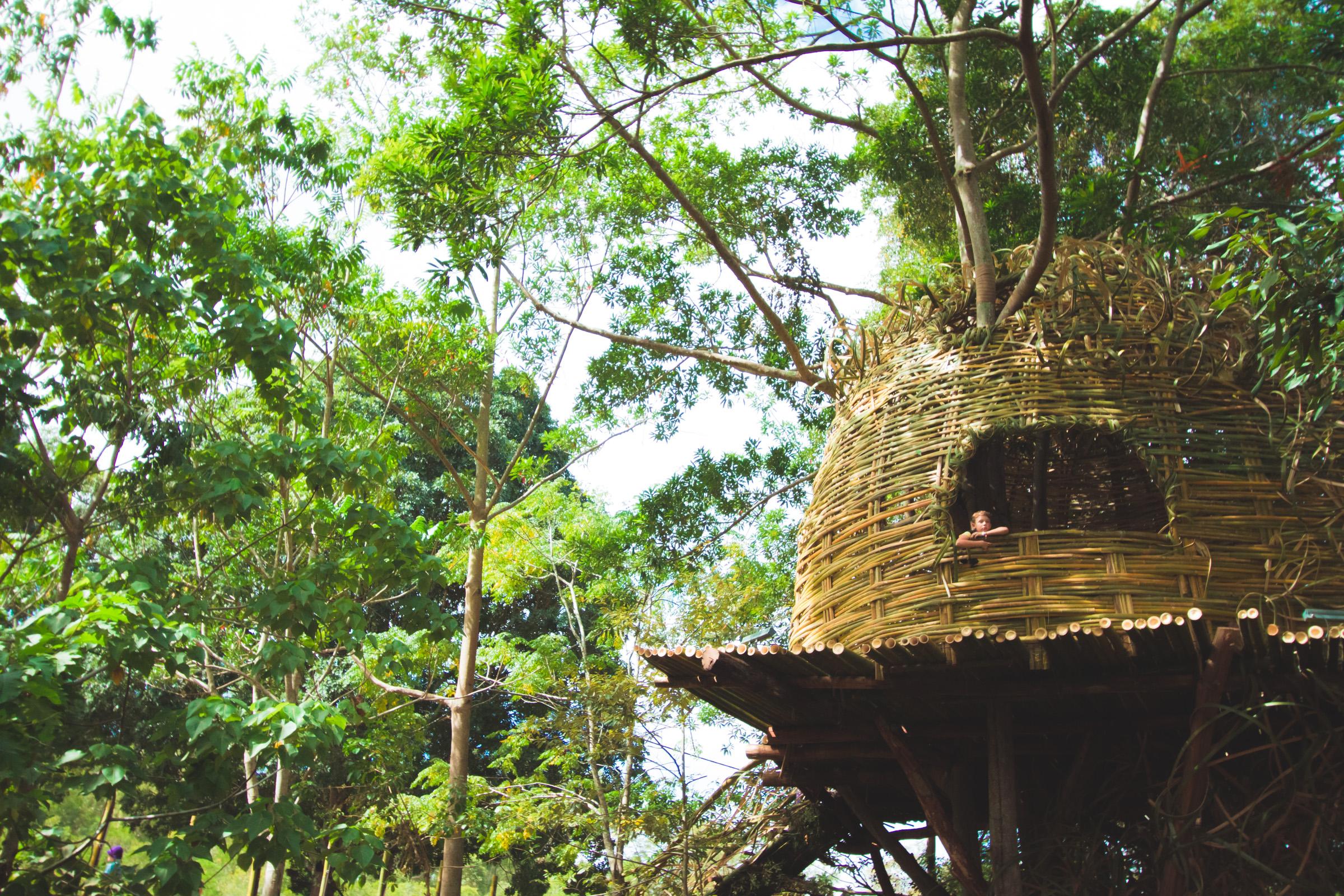 Tree house photography by Mercurio Alvarado  (104 of 132).jpg