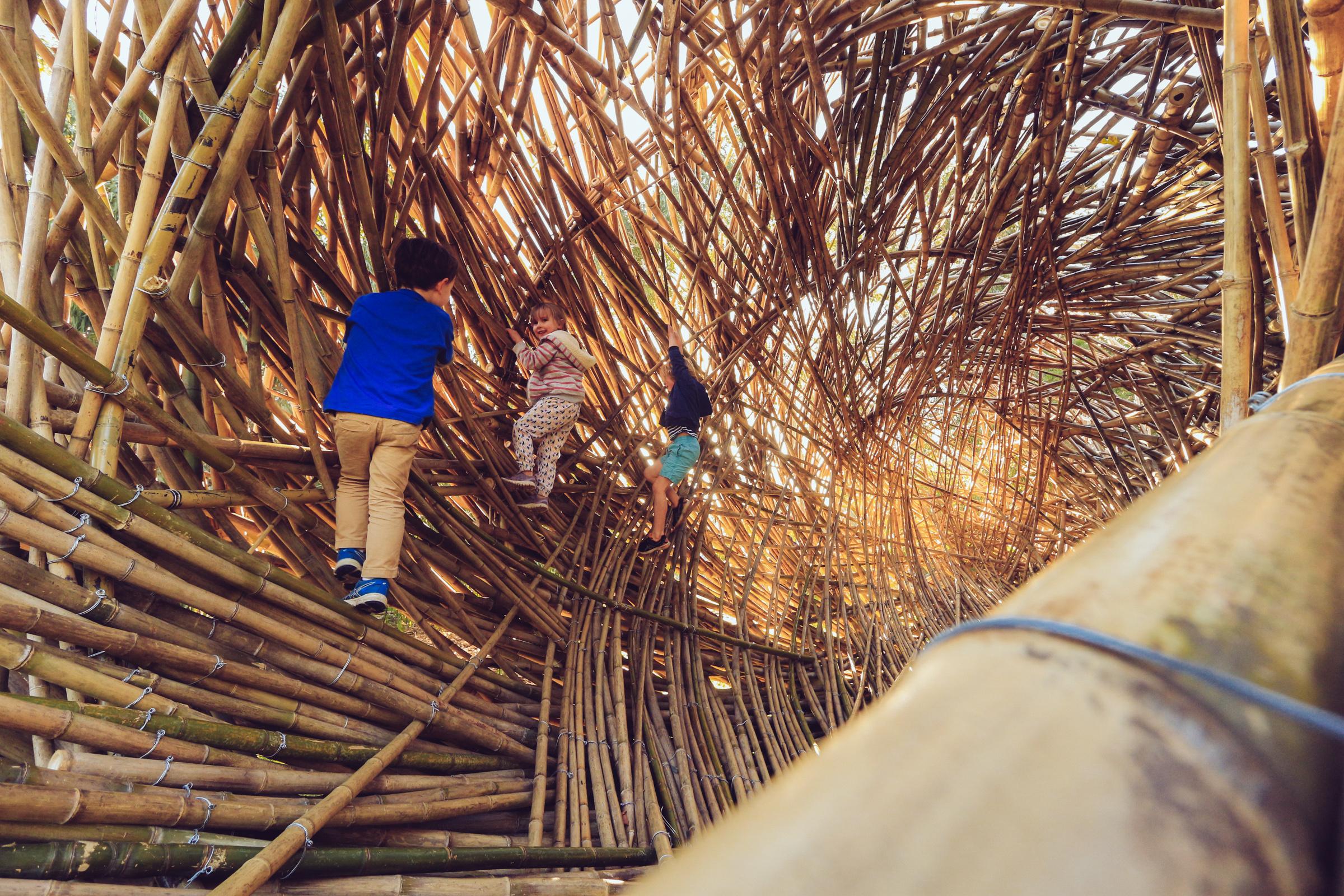Regenesis Photography by Juan Pablo Pinto (4 of 10).jpg