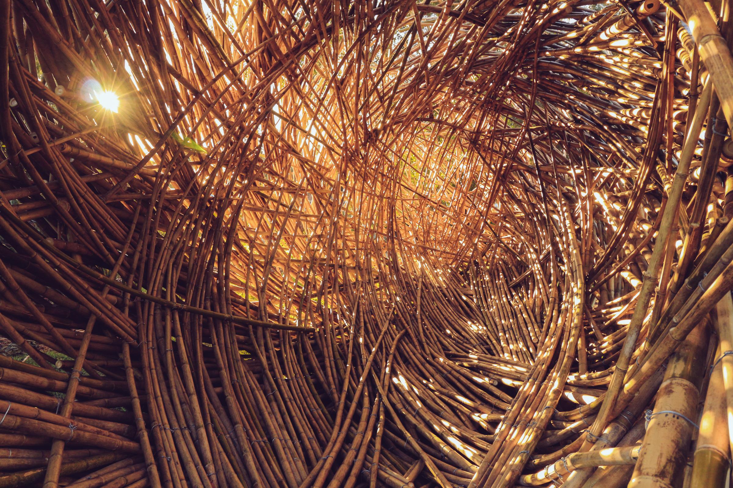Regenesis Photography by Juan Pablo Pinto (5 of 10).jpg