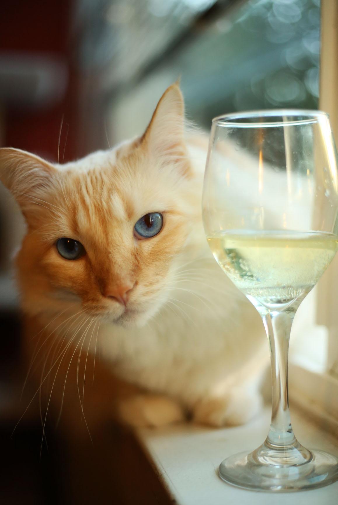 Mr. Milo Kittysbee. The best turkey thief in Cap Hill.