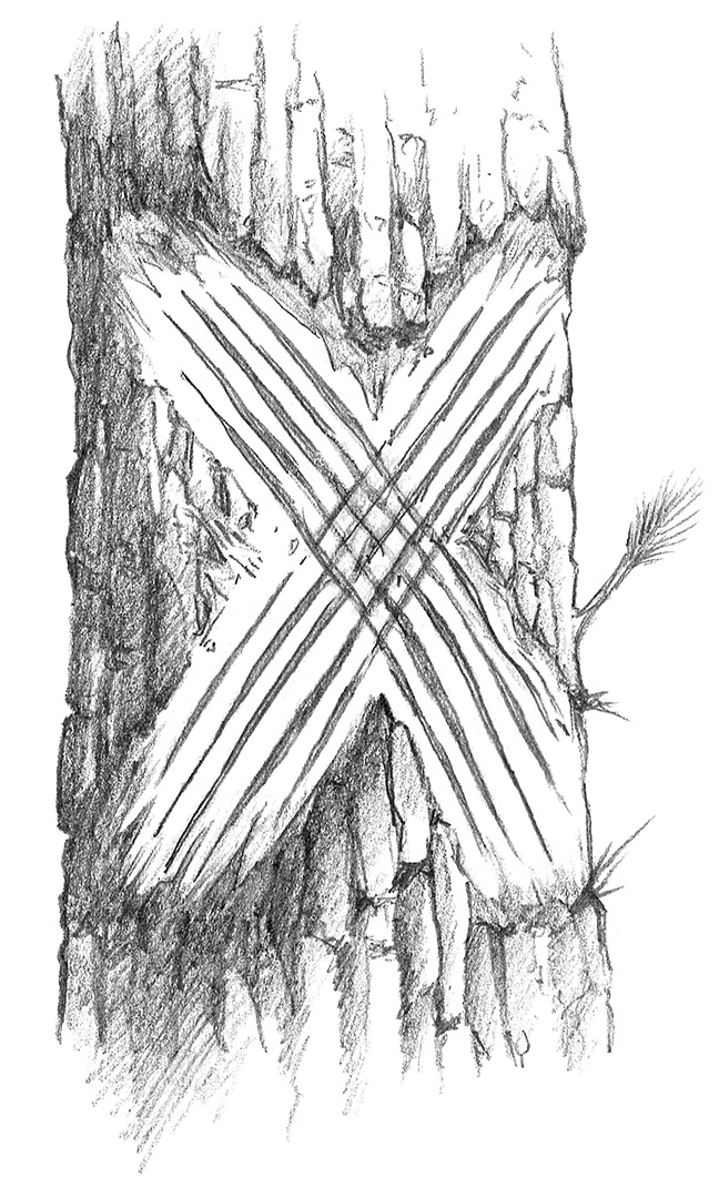 Wolverine_Sketch1.jpg