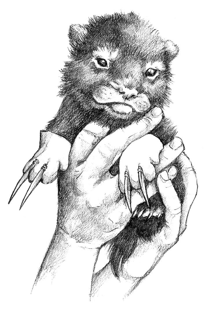 Wolverine_Sketch5.jpg