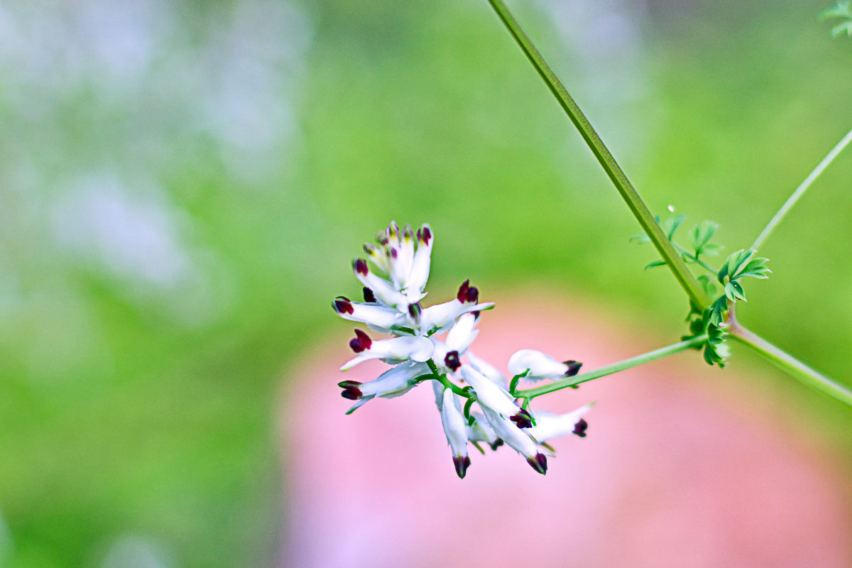 5 flinders flower crop.jpg