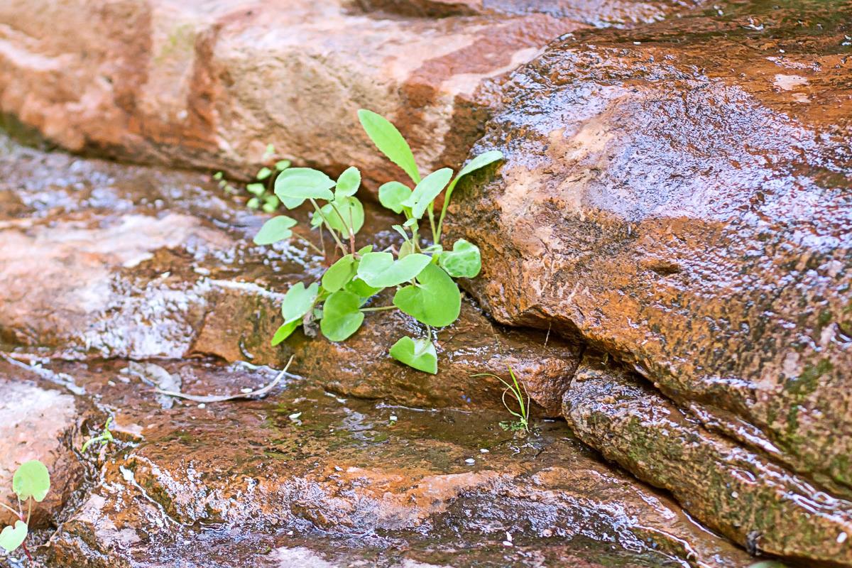 6 flinder rock plant crop.jpg