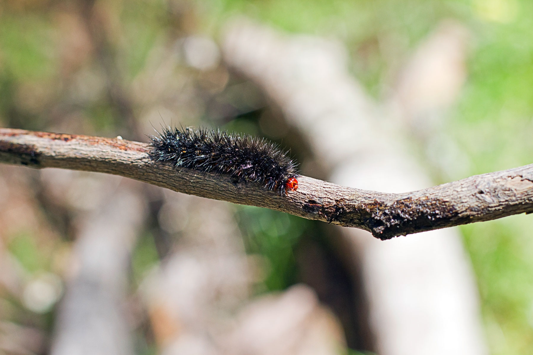12 caterpilla.jpg