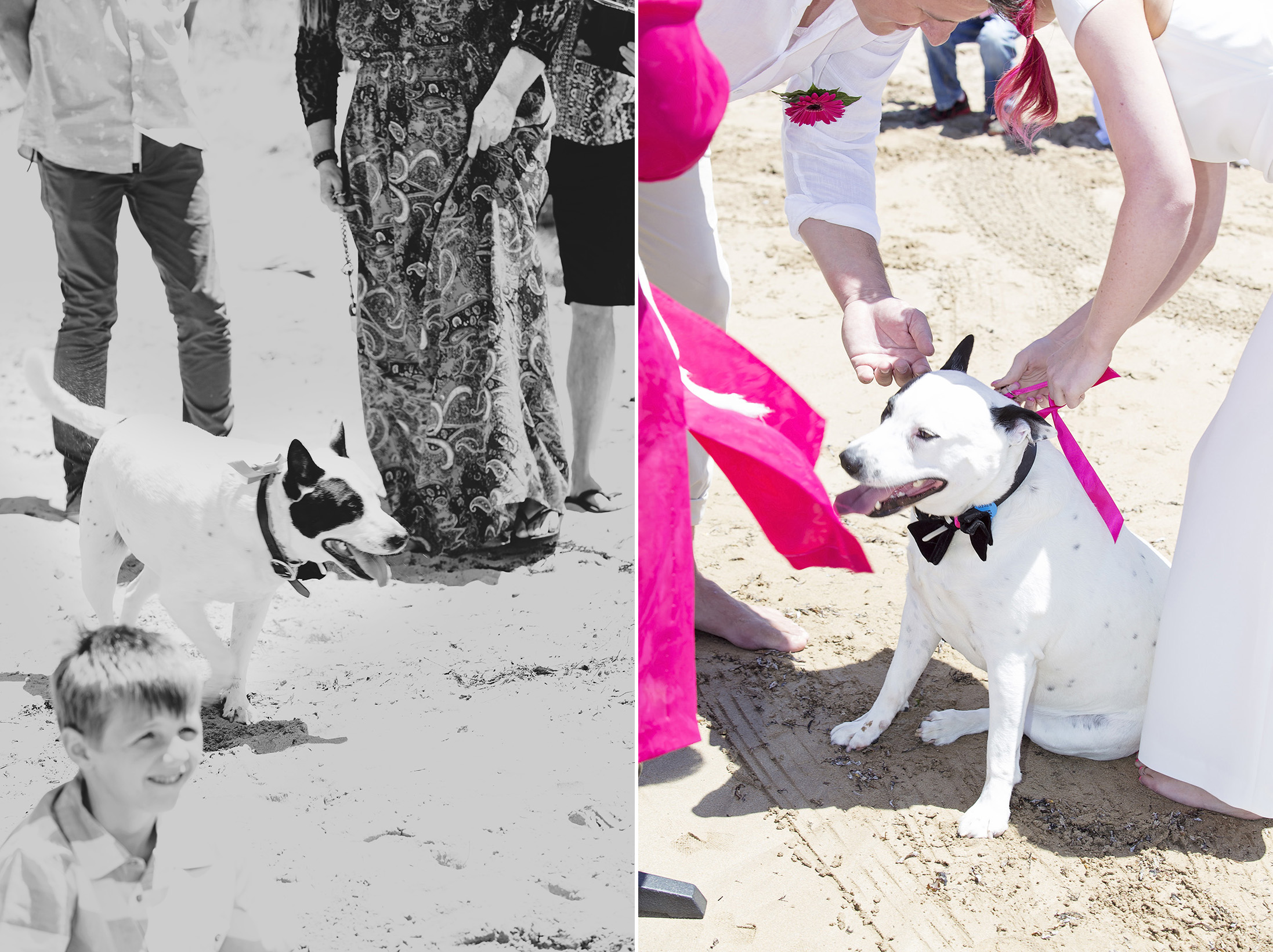 Victor Harbour Wedding Photography 033 dog ring bearer.jpg