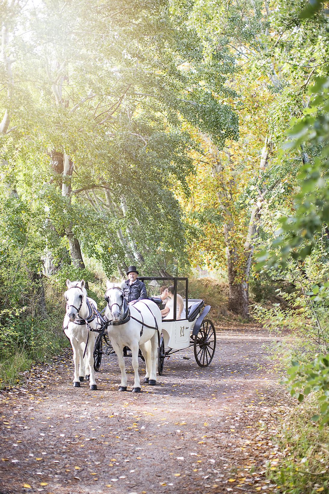 Clarendon Same Sex Wedding Photos 01 Horse & Carriage.jpg