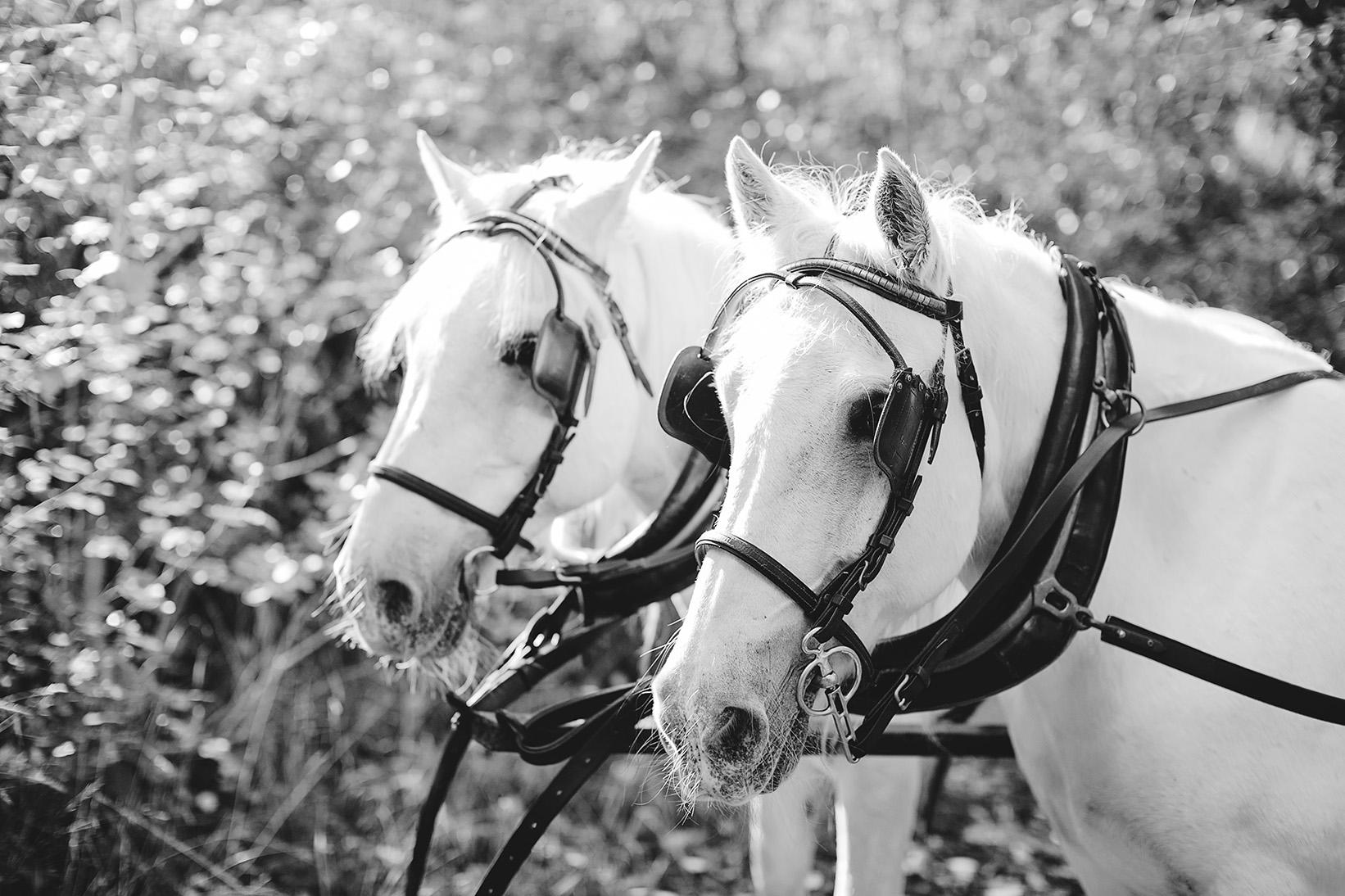 Clarendon Same Sex Wedding Photos 03 Horse & Carriage.jpg