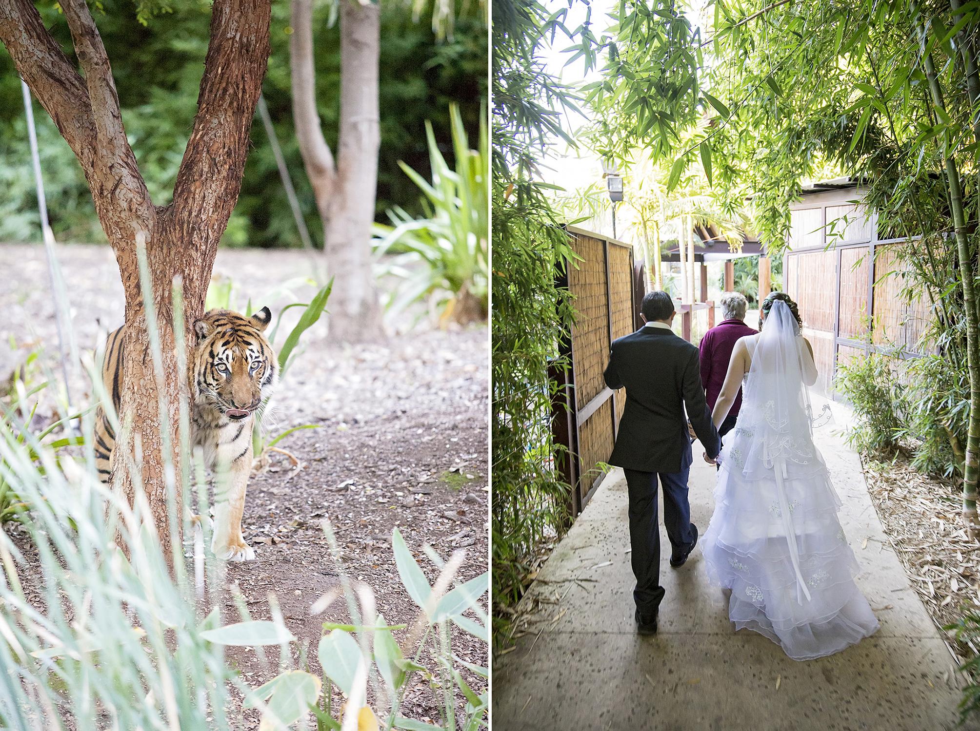 Unique Adelaide Zoo Wedding 36.jpg