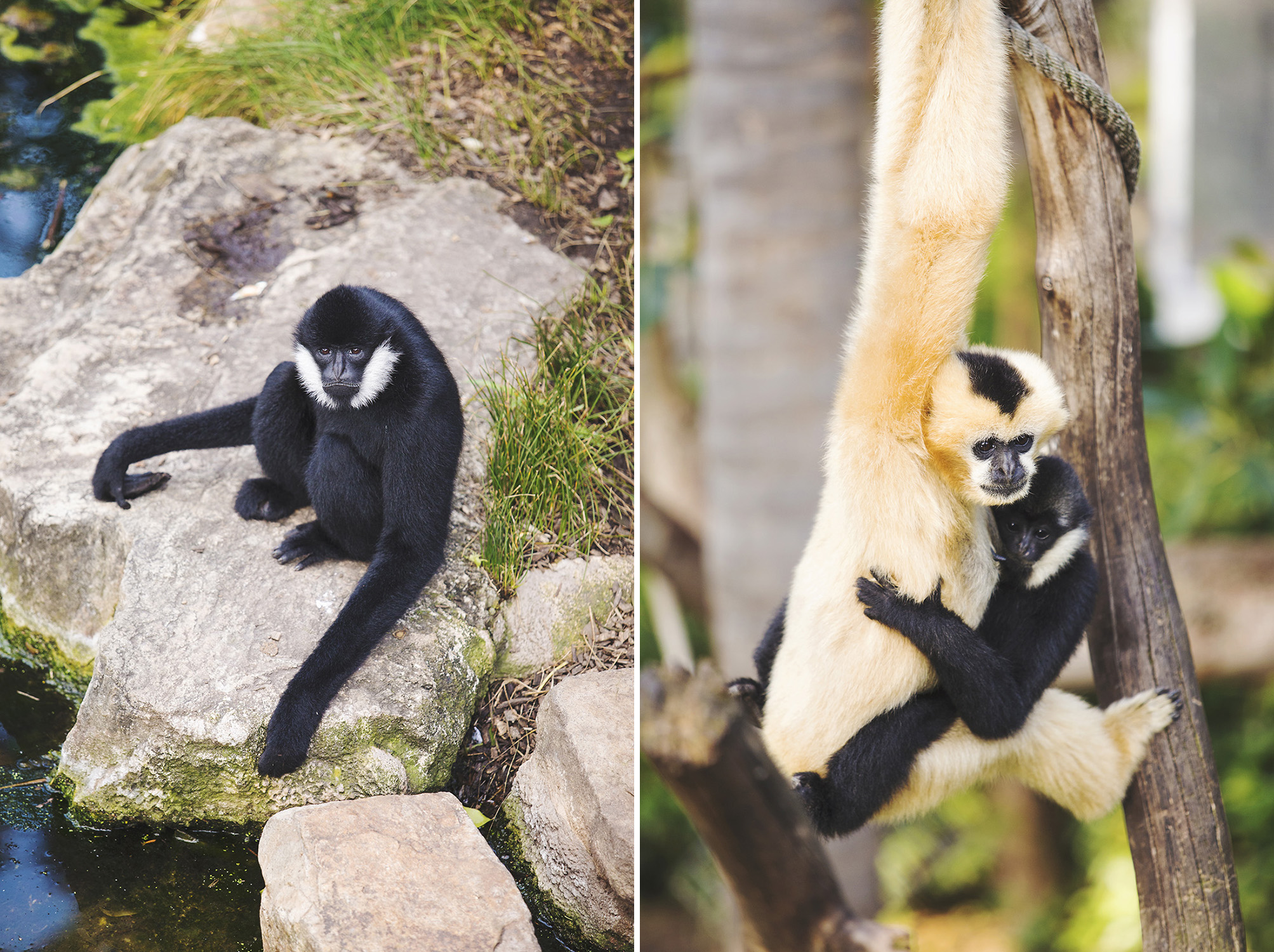 Surprise Adelaide Zoo Wedding 16.jpg
