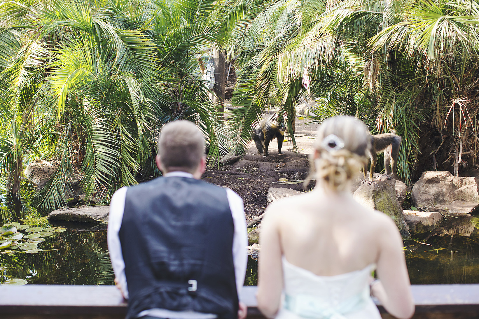 Surprise Adelaide Zoo Wedding 19.jpg
