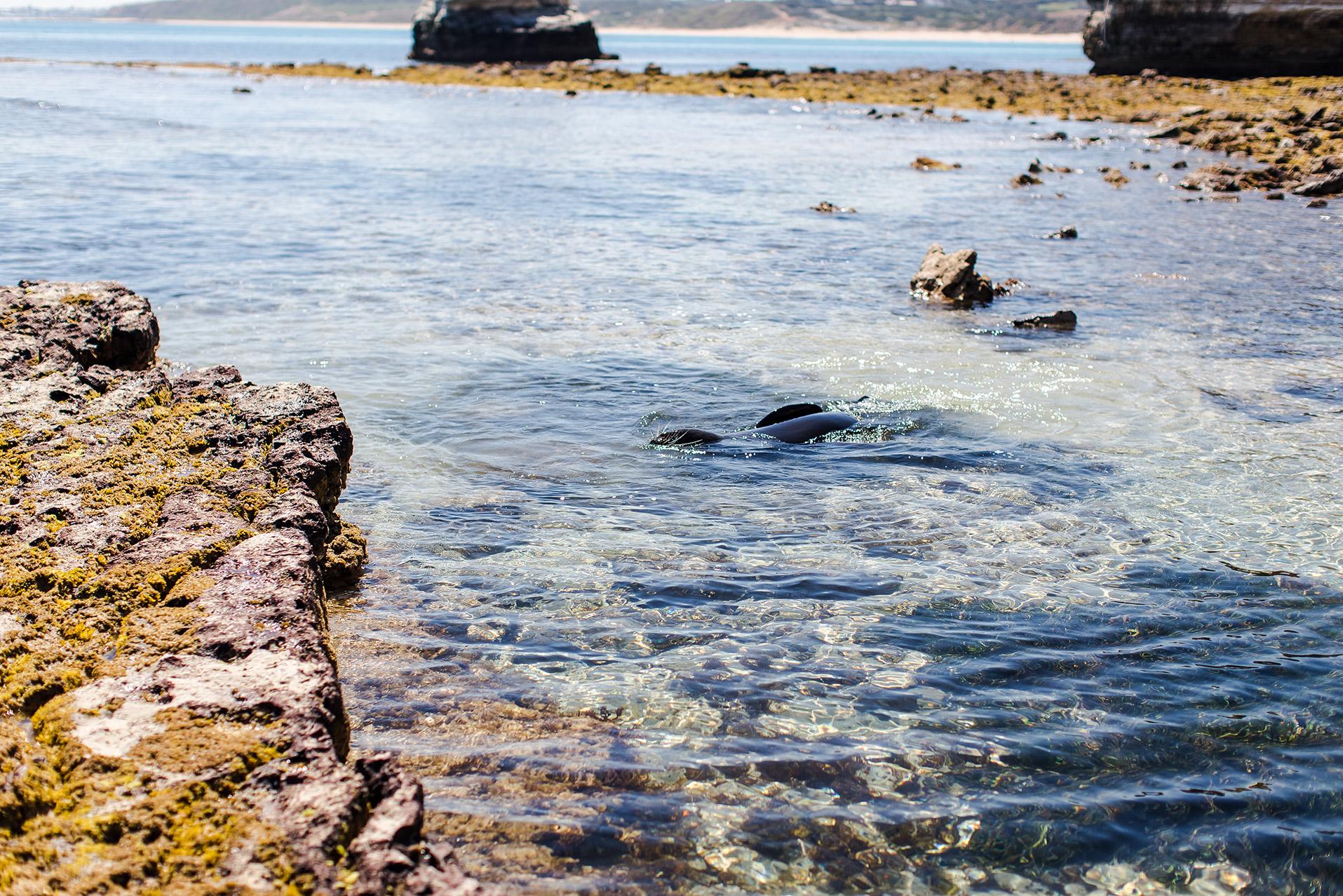 relaxing front camera maslin beach 16.jpg